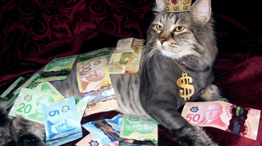 Cat sitting in a pile of money.