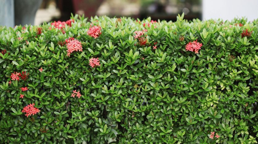 Add hedges to provide privacy.