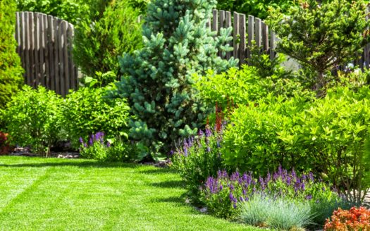 Backyard tips to improve home value.